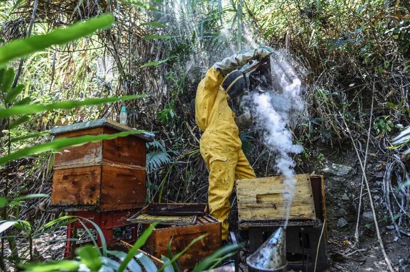 Hundreds of hives have been killed off in Colombia in recent years, and some investigations have pointed to fipronil, an insecti