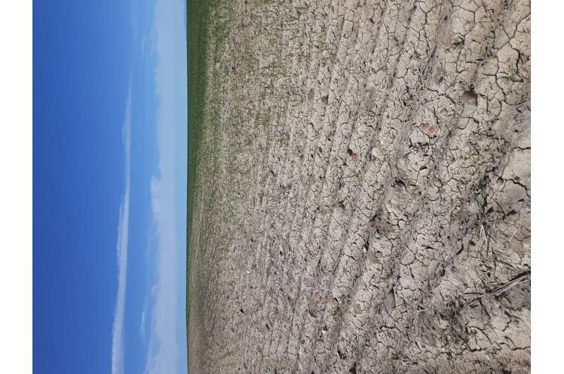 Hungry grasshoppers spurred by US drought threaten rangeland