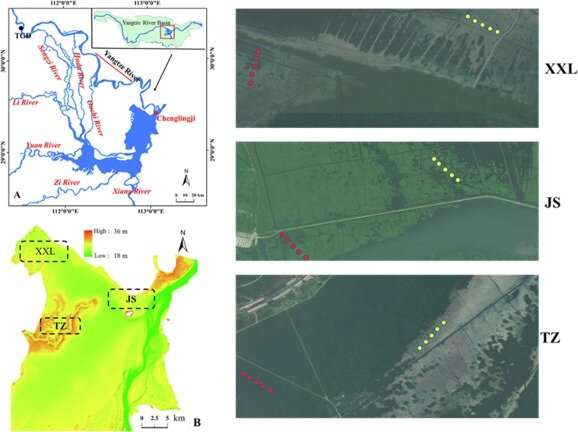 Hydrological environment influences litter carbon input into soil organic carbon pool in Dongting Lake floodplain