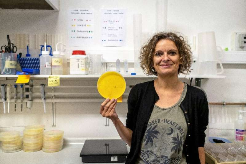 'I'll be curious to see if it develops by forming pillars,' says Blob specialist Audrey Dussutour