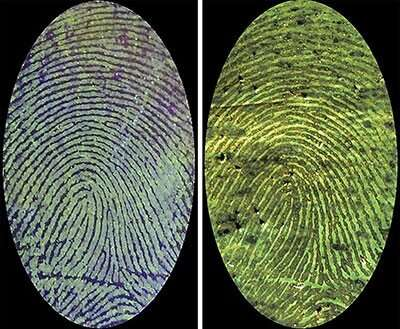 Illuminating invisible bloody fingerprints with a fluorescent polymer