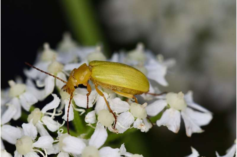 Impoverished meadow and forest flora threaten insects