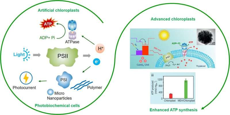 Improve photosynthesis performance via photosystem II-based biomimetic assembly