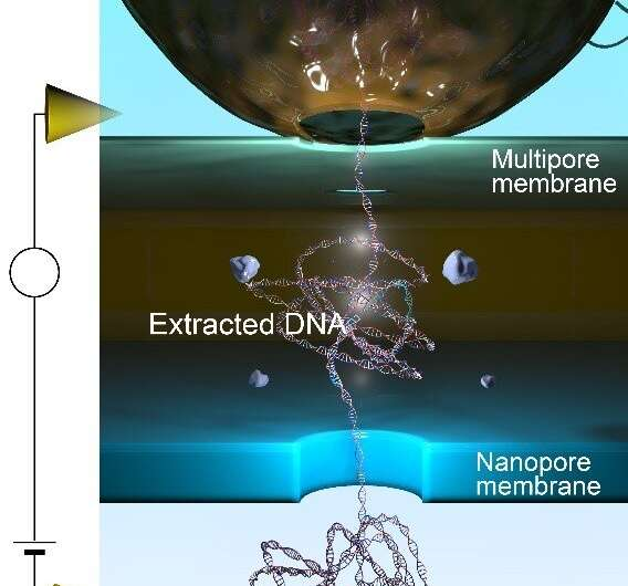 In situ extraction and detection of DNA is an im-pore-tant development