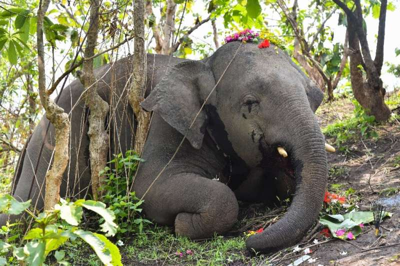 Indian authorities are investigating the deaths of at least 18 elephants in the northeastern state of Assam