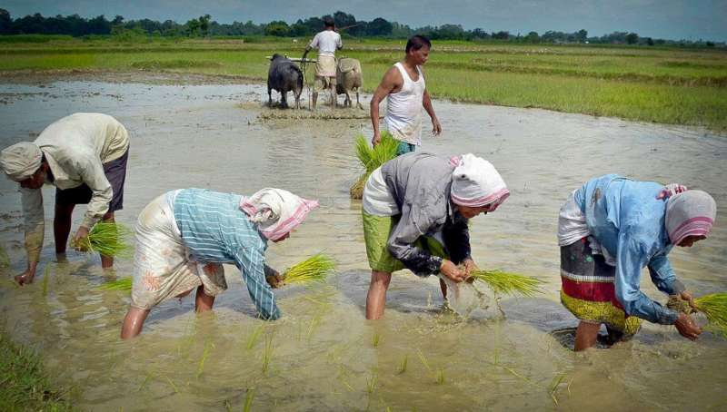 India's heirloom rice can supplement infant nutrition