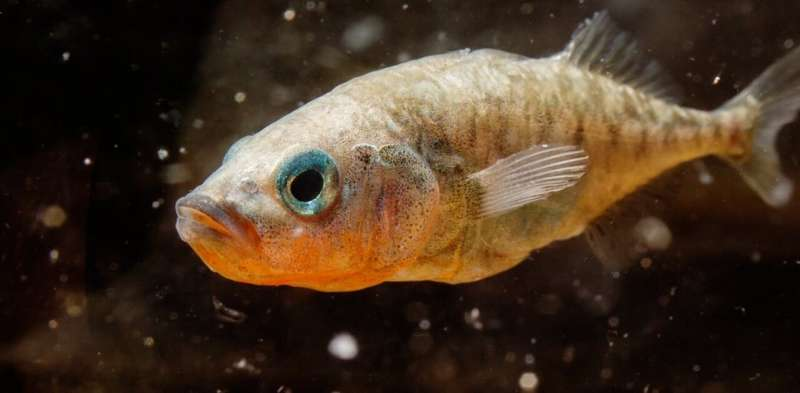 In fish, parents' stressful experiences influence offspring behavior via epigenetic changes