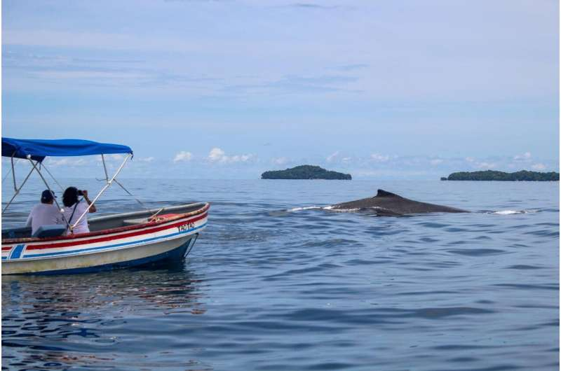 Informed tourists make whale watching wafer for whales