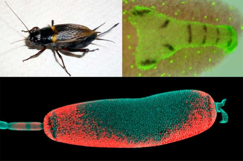 La evolución de los insectos fue más compleja de lo que se suponía anteriormente