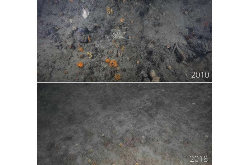 Inside the Irish lough that offers a window into the deep sea