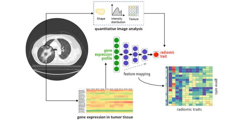 Integrating medical imaging and cancer biology with deep neural networks