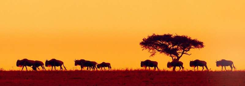 International team partners with UN to launch global initiative to map ungulate migrations
