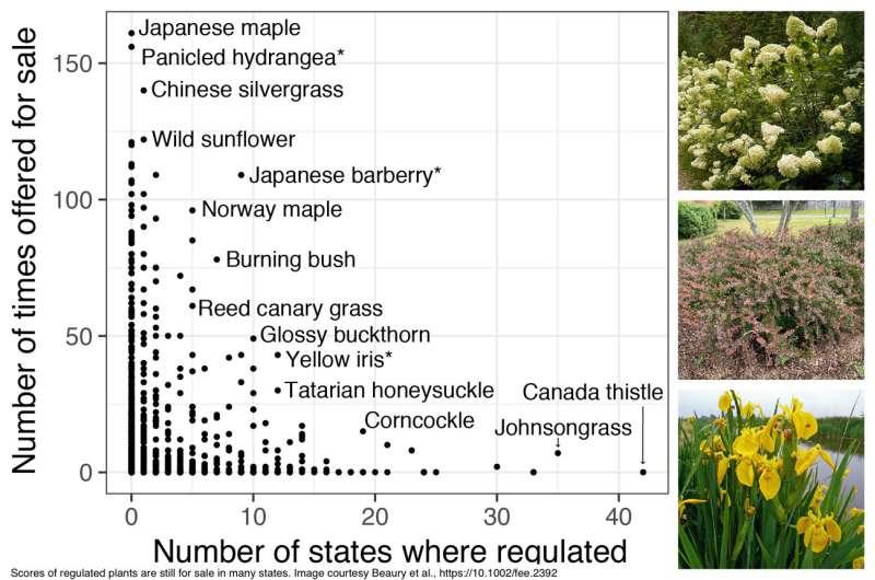 Invasive Plants are Still for Sale as Garden Ornamentals, Research Shows