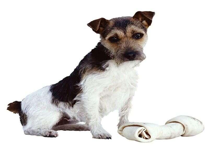 La investigación comienza en cinco estados después de que un perro importado desarrollara rabia
