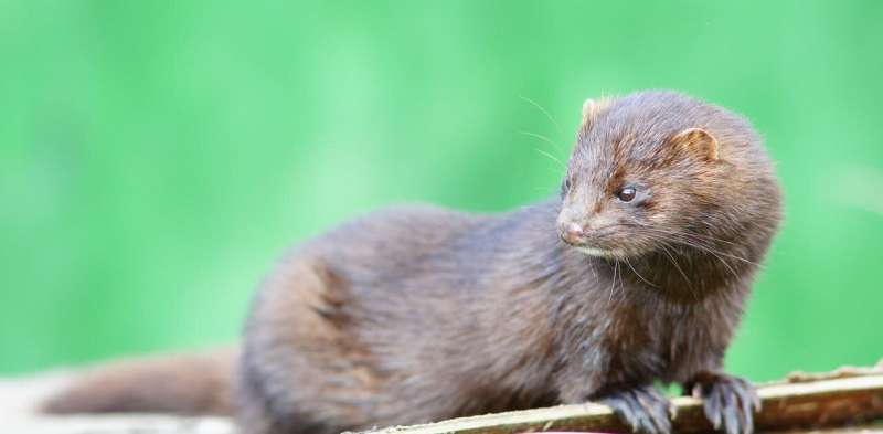 Is COVID-19 infecting wild animals? We're testing species from bats to seals to find out