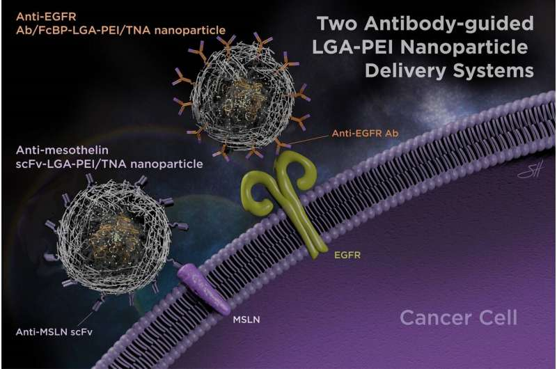 It's all in the delivery – Antibodies improve nanoparticle delivery of therapeutic nucleic acids