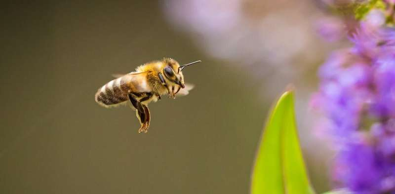 It's bee season. To avoid getting stung, just stay calm and don't swat