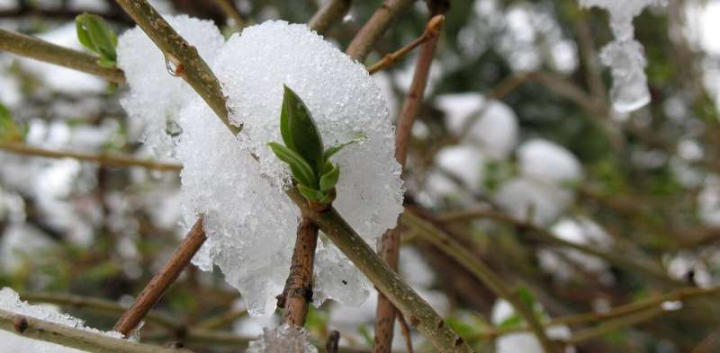 January warm spells, March freezes: How plants manage the shift from winter to spring