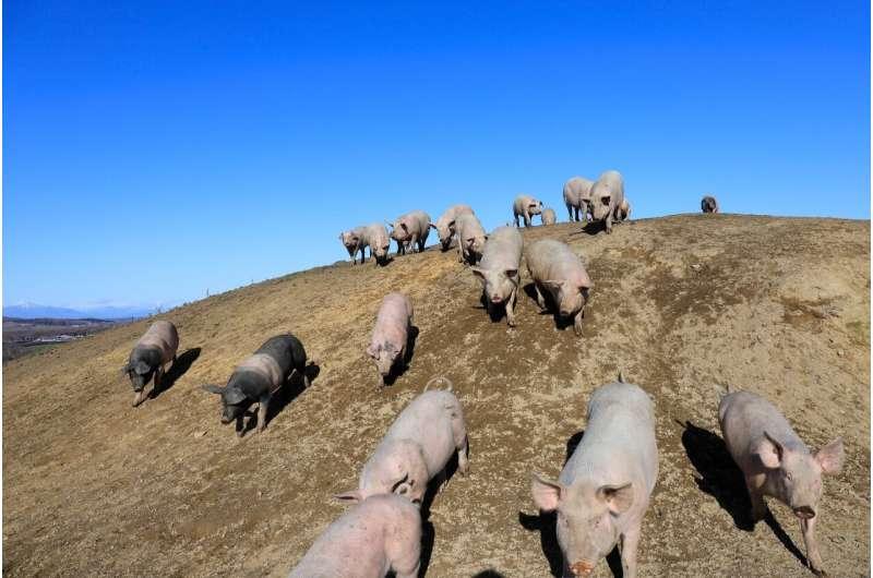 Los consumidores japoneses están más preocupados por la edición genética del ganado que de las verduras, muestra una encuesta