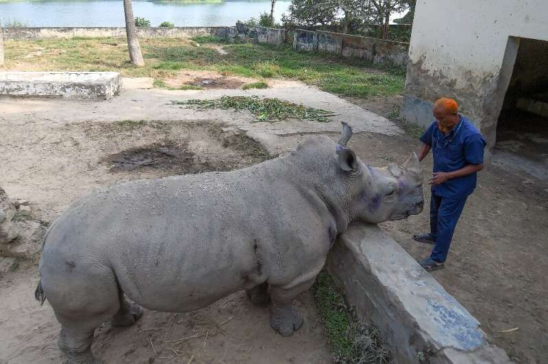 Kanchi the rhino at a Bangladeshi zoo has been alone since the death of her partner in 2014