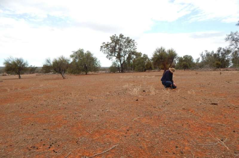 Kangaroo overgrazing could be jeopardising land conservation, study finds