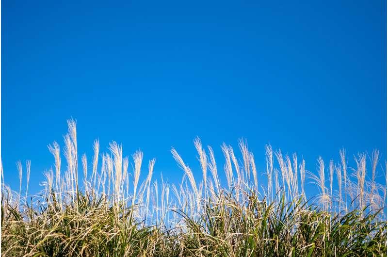 'Manténgase alejado del césped': el biocombustible que podría ayudarnos a alcanzar el cero neto