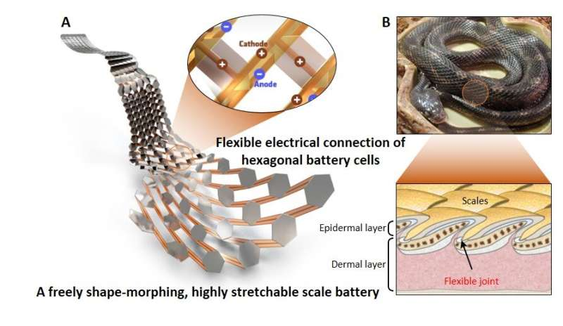 KIMM develops a flexible, stretchable battery capable of moving smoothly like snake scales