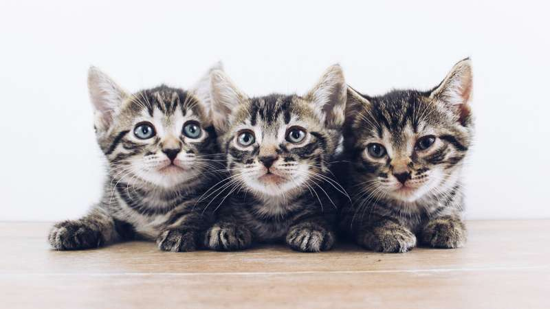 Kittens could hold key to understanding deadly diarrheal disease in children