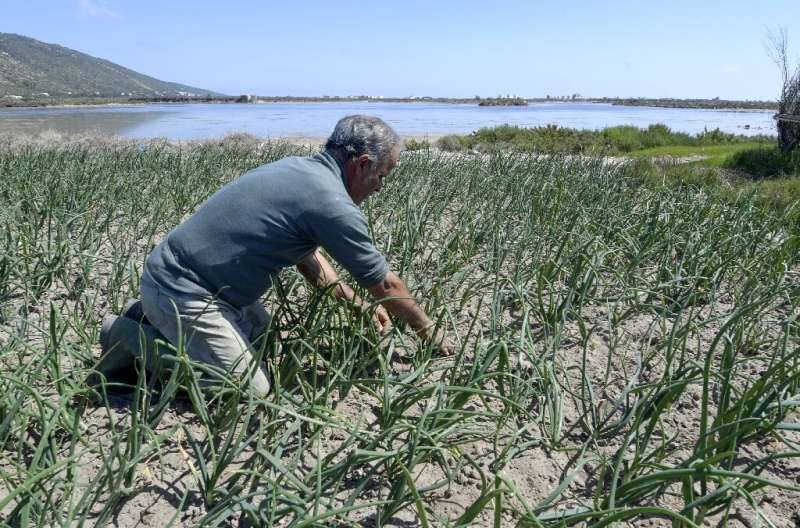 Tunisia 'sandy' farms resist drought, development Known as 'ramli' farms, this delicate balance with nature is under threat as rainfall becomes less regular due to climate change