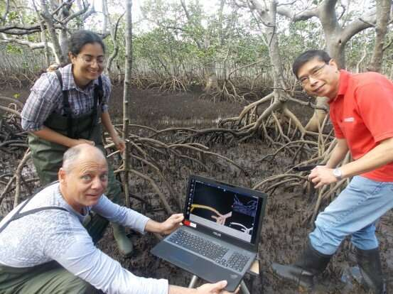 Lack of species depth threatens mangroves