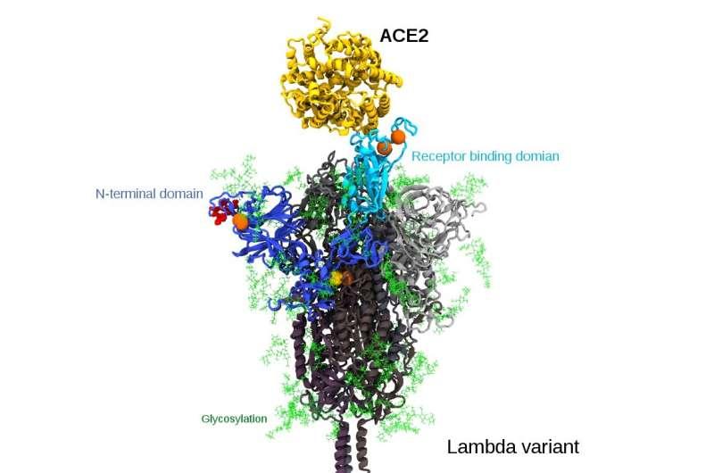 Lambda coronavirus variant