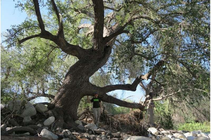 Landmark global report: 1 in 3 tree species face extinction
