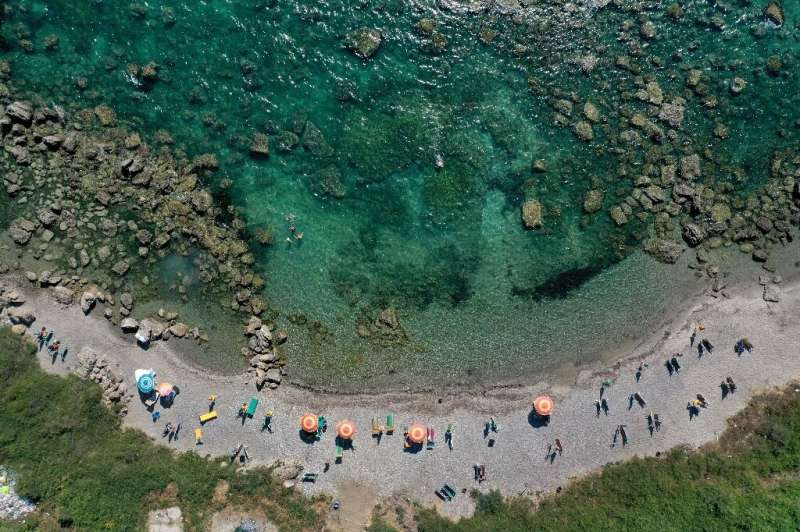 Large brown algae forests on the Albanian coast are steadily shrinking, scientists warn