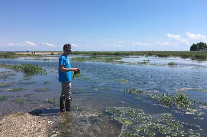 Learning How Salt Marsh Plants May Signal Carbon Capture Capacity