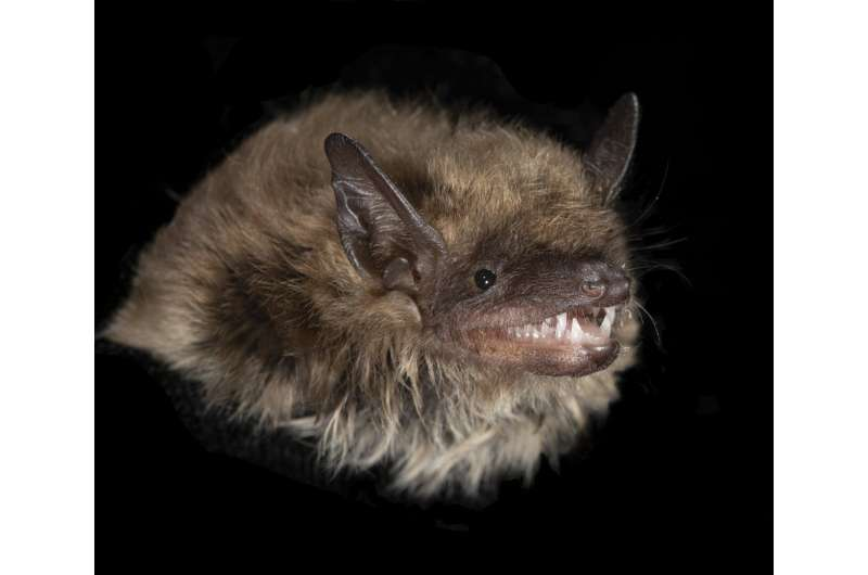 LED light pollution is a major turnoff to some North American bats