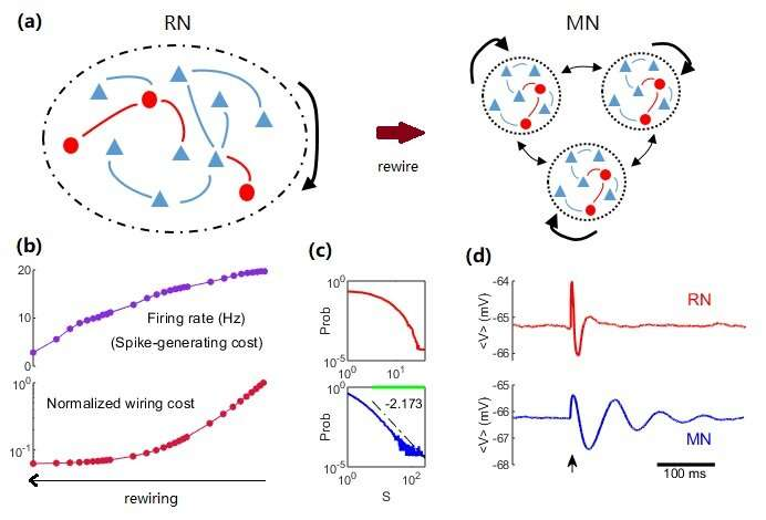 Less is more: the efficient brain structural and dynamic organization