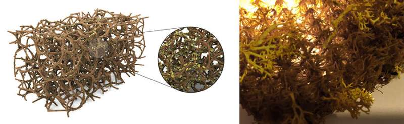 Lichens may one day detoxify the air in your home