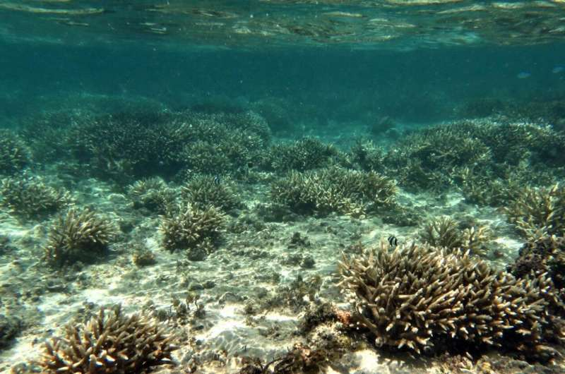 Light, in addition to ocean temperature, plays role in coral bleaching