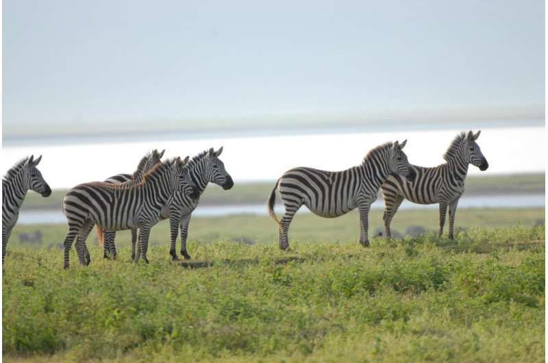 Linguistic and biological diversity linked