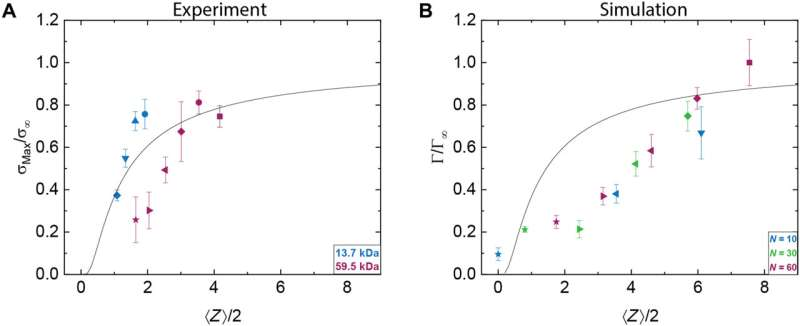 Load-bearing entanglements in polymer glasses