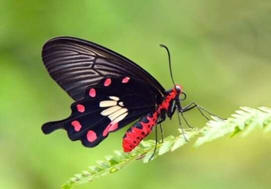 Local butterflies which enjoy exotic plants