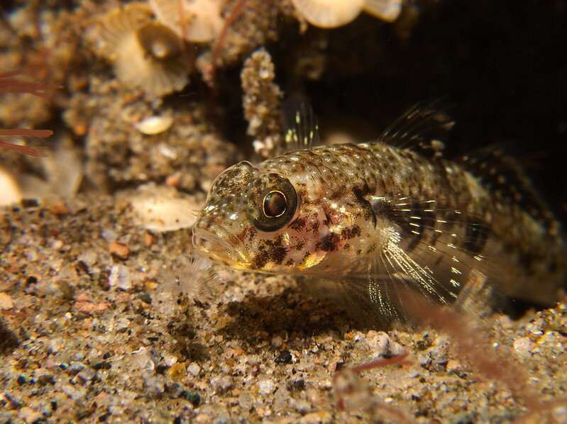 Lone changer: fish camouflage better without friends nearby