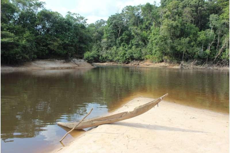 La pérdida de fauna en los bosques tropicales impide alcanzar los Objetivos de Desarrollo Sostenible