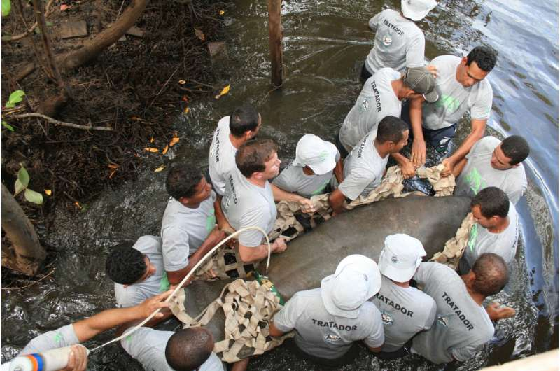 Low genetic diversity in two manatee species off South America