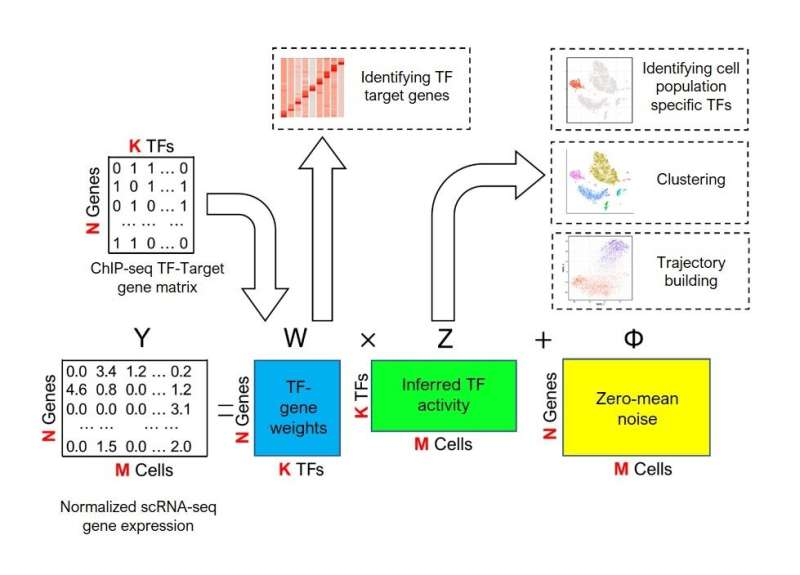 Machine learning algorithm predicts how genes are regulated in individual cells
