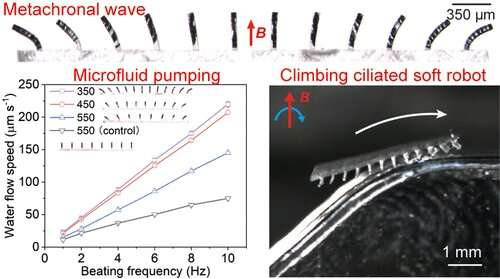 Magnetically propelled cilia power climbing soft robots and microfluidic pumps