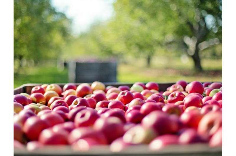 Recuperar el desperdicio agrícola y alimentario