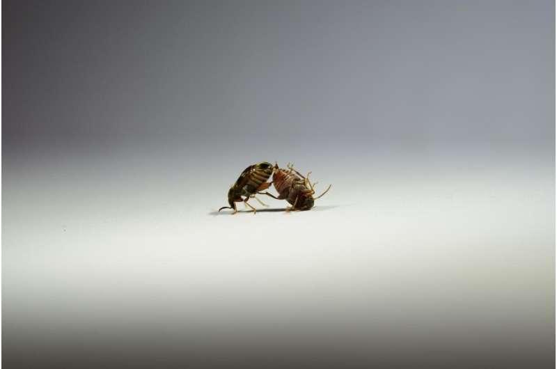 Males help keep populations genetically healthy
