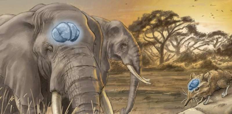 Mammals' brains: new research shows bigger doesn't always mean smarter