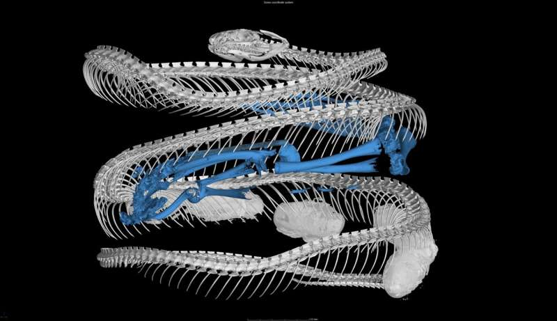 Mammals on the menu: Snake dietary diversity exploded after mass extinction 66 million years ago